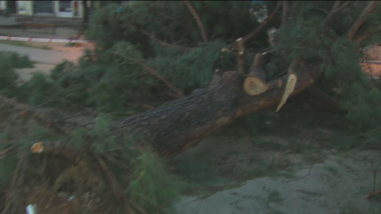 El viento y la lluvia provocan en Madrid 243 incidencias por caída de árboles e inundaciones