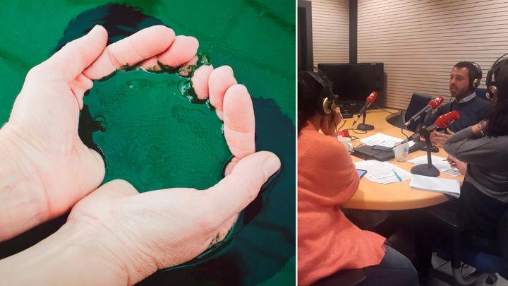 Cianoalgae, la revolución de las algas para la cosmética