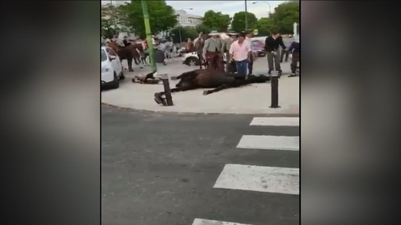 El Pacma denuncia las convulsiones de un caballo en plena feria de Sevilla