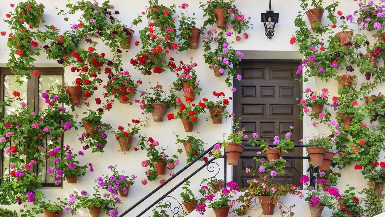 Los patios de Córdoba se llenan de flores con la primavera