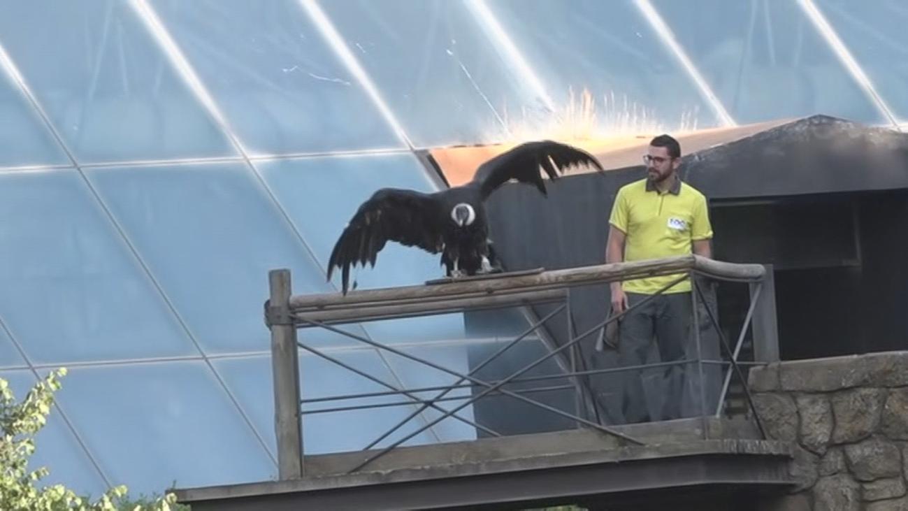 Espectáculo de aves rapaces en el Zoo de Madrid