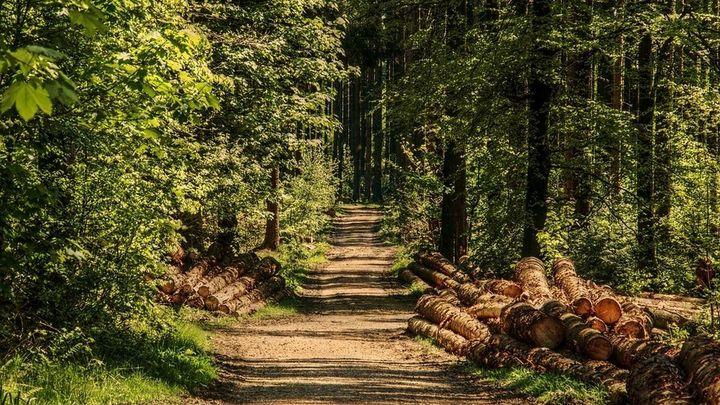 ¿Cómo puedo ser agente forestal en Madrid?