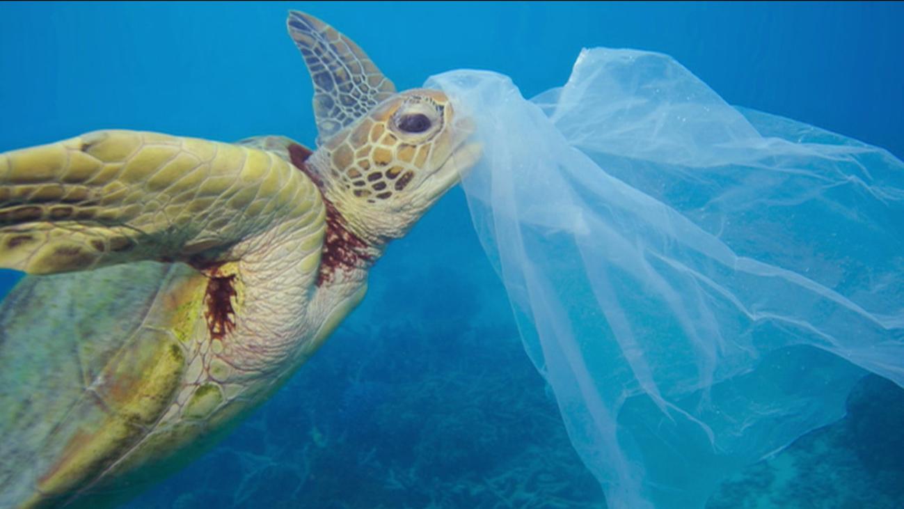 Reclaman un Tratado global  y establecer medidas para proteger los océanos