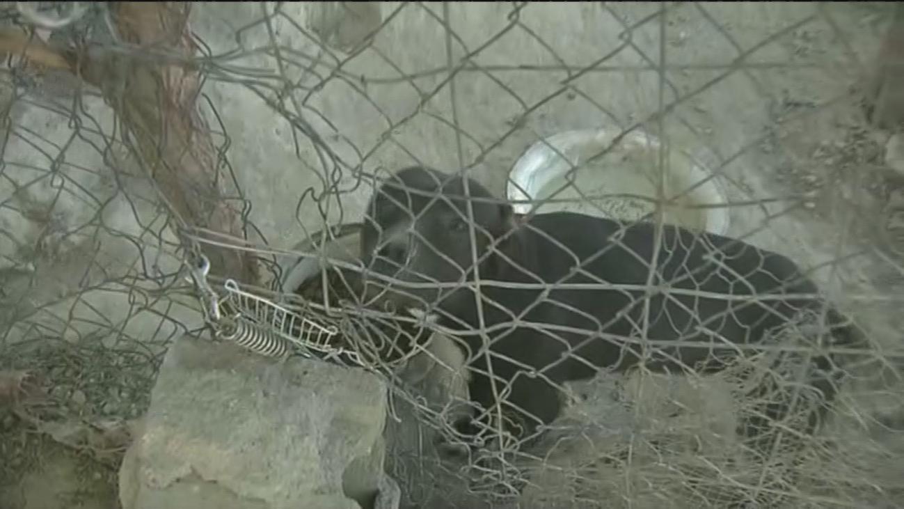 Mascotas abandonadas en la Cañada Real, víctimas de los realojos