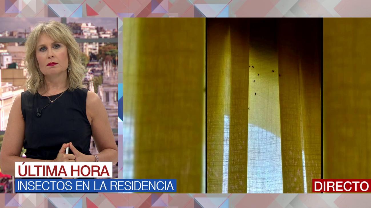 Denuncian una plaga de insectos en una residencia de Alcorcón