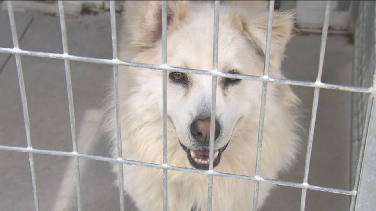 Enfrentados por la custodia de su perro