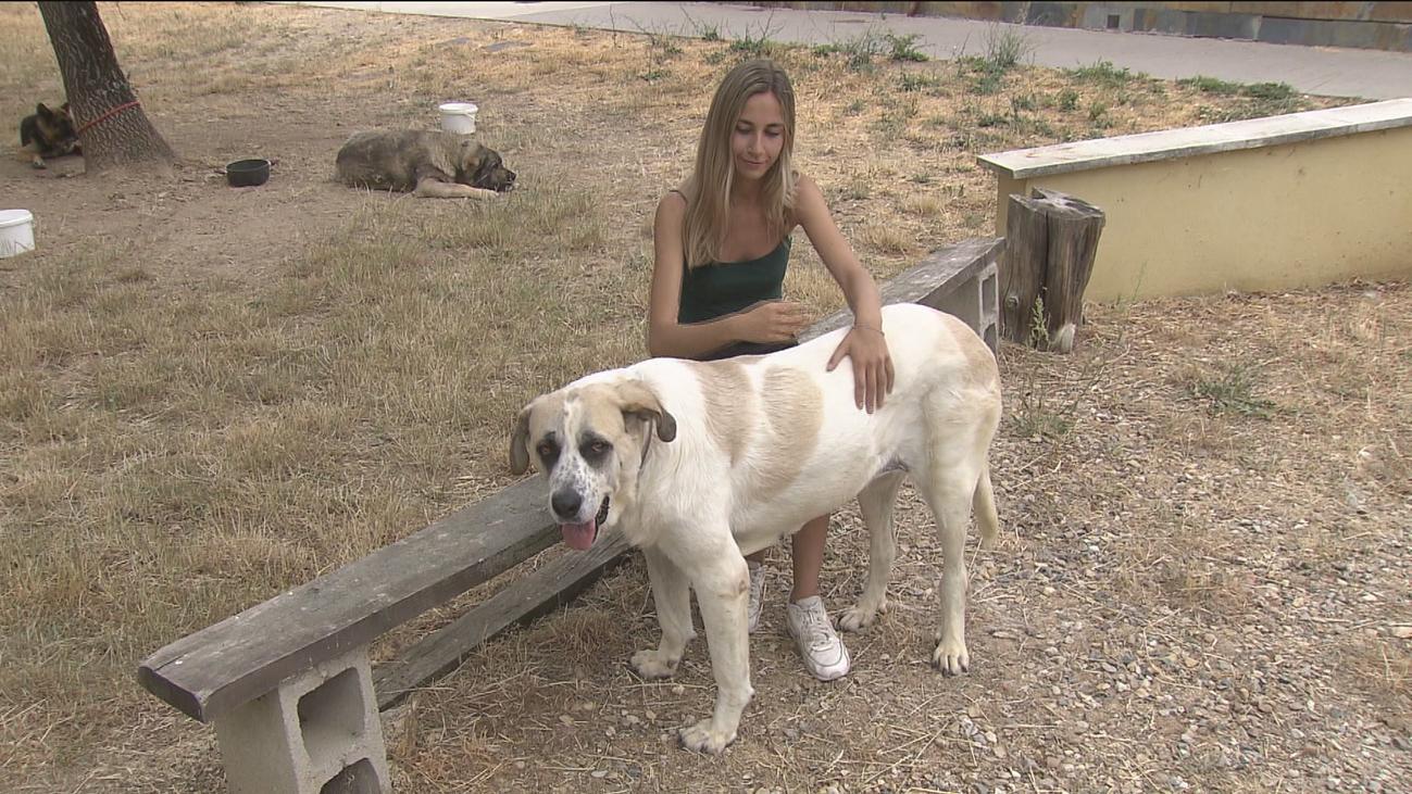 El centro Fenixcan, un hogar de pasos para perros en Guadarrama