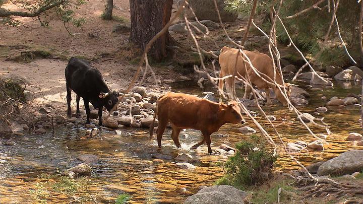 La Sierra de Guadarrama estará en una las ferias de turismo más importante del mundo