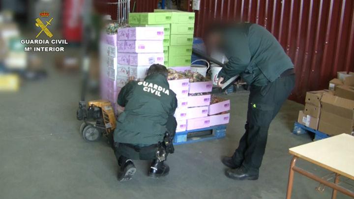 La Guardia Civil incauta 300 toneladas y 39.000 litros de alimentos y bebidas falsificadas