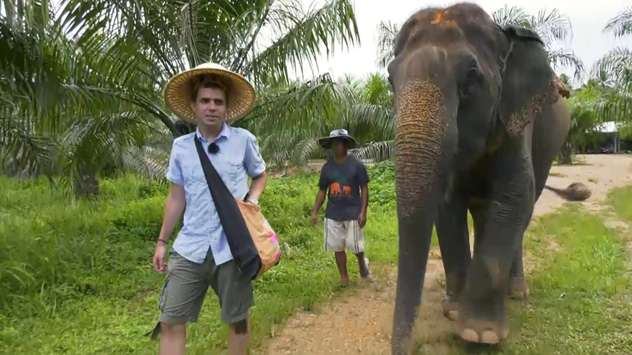 El Santuario de elefantes de Krabi