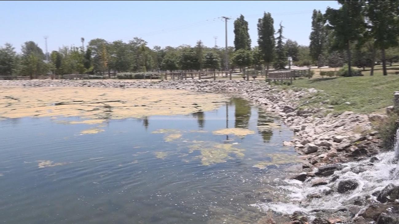 Preocupación por la plaga de algas en Carabanchel