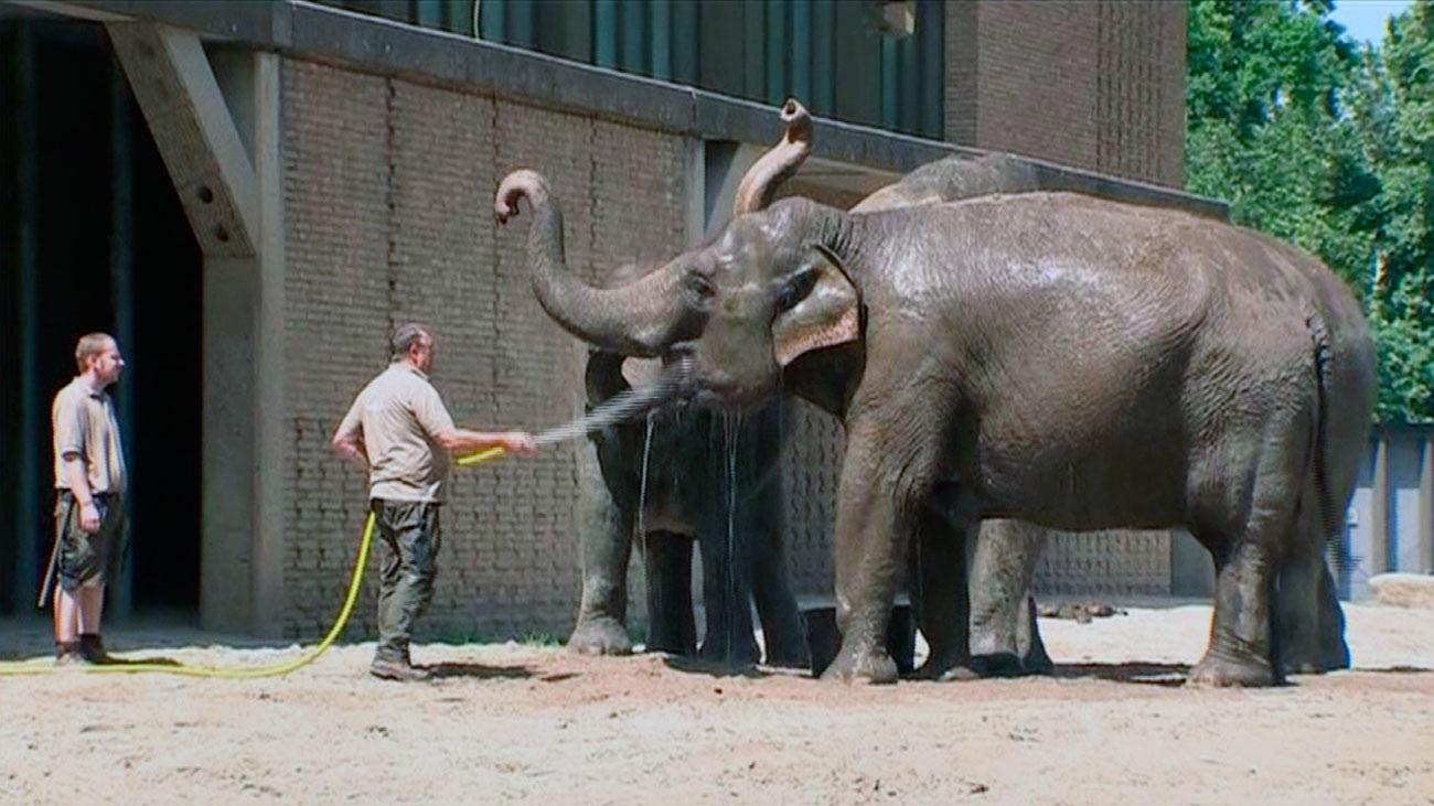 La ola de calor, también en los zoos