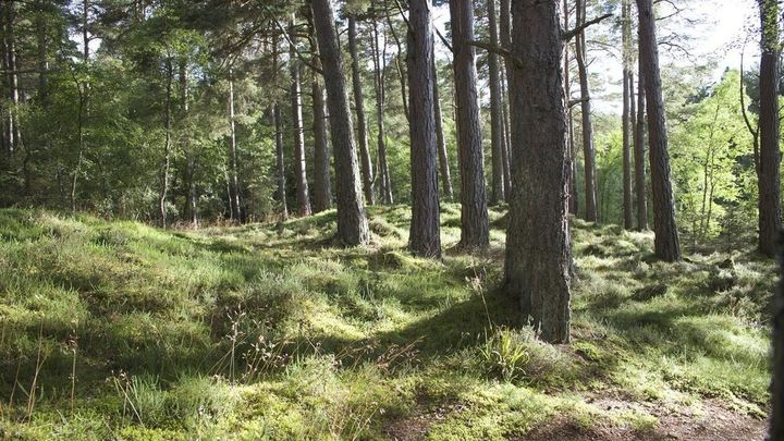 ¿Cómo trabajan en verano los agentes forestales?