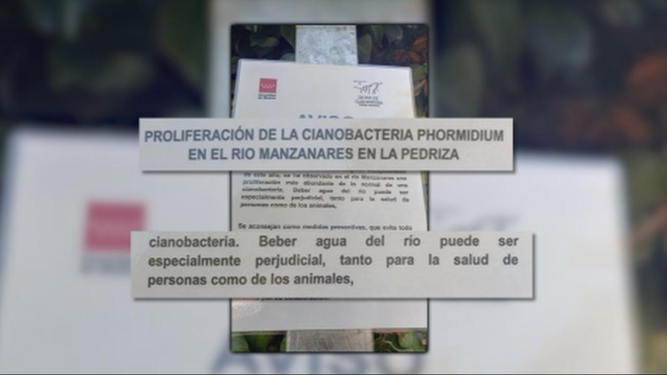 Alerta por la proliferación de una bacteria tóxica en el Río Manzanares