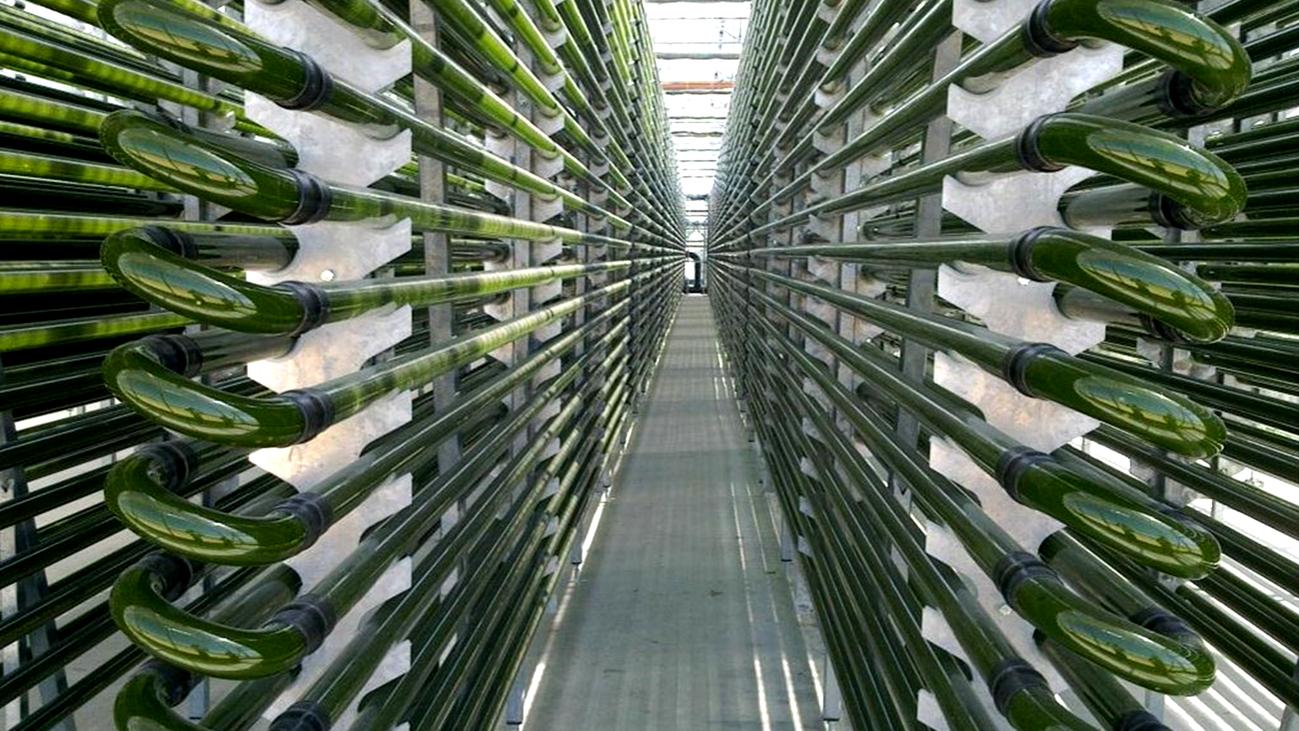 Microalgas, un superalimento que se produce en Madrid
