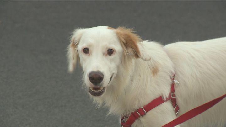 La Policía Municipal descarta casos de envenenamiento de perros en Móstoles
