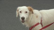 Al menos siete  perros muertos envenenados en Móstoles