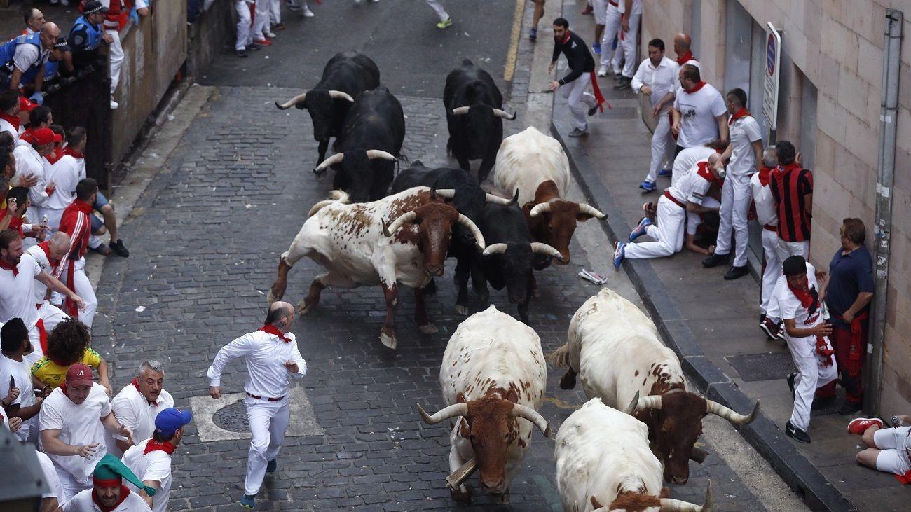Toros por las calles de Pamplona en San Fermín