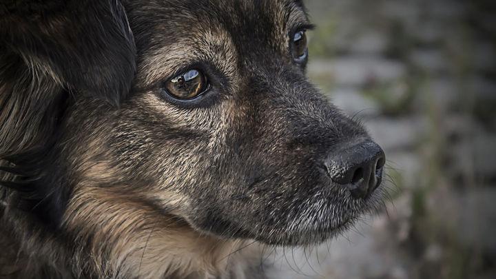 La policía de Fuenlabrada investiga por delito de maltrato animal al dueño de un perro con 'delgadez extrema'