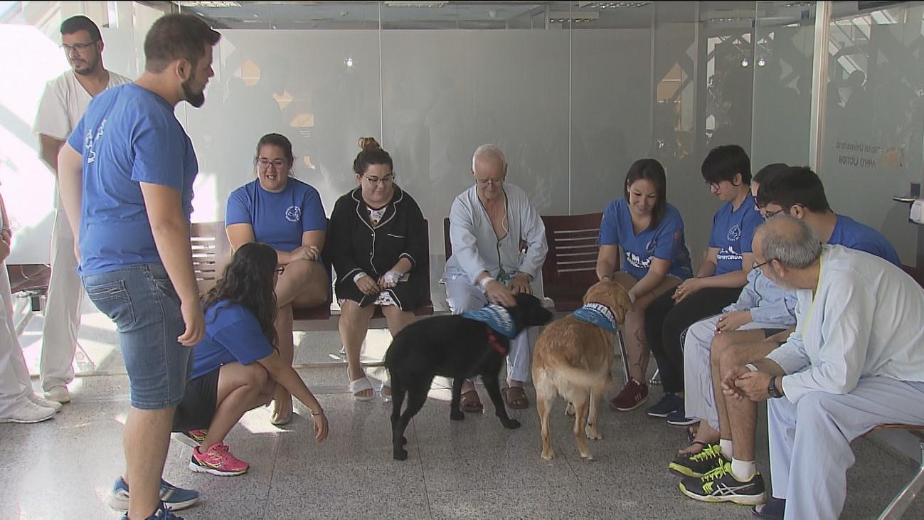 Cuando un perro es la mejor terapia en un hospital