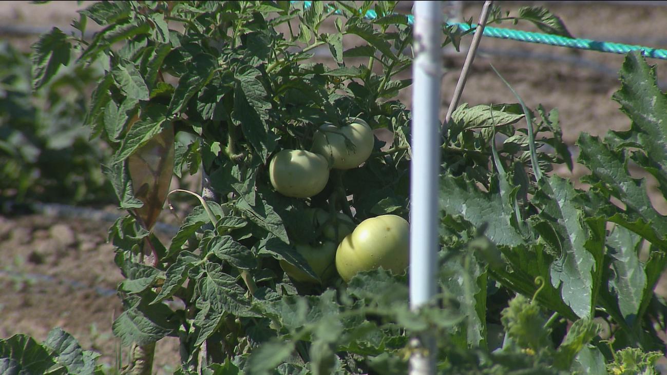 Fuenlabrada lanza una app para vender hortalizas cultivadas en el municipio
