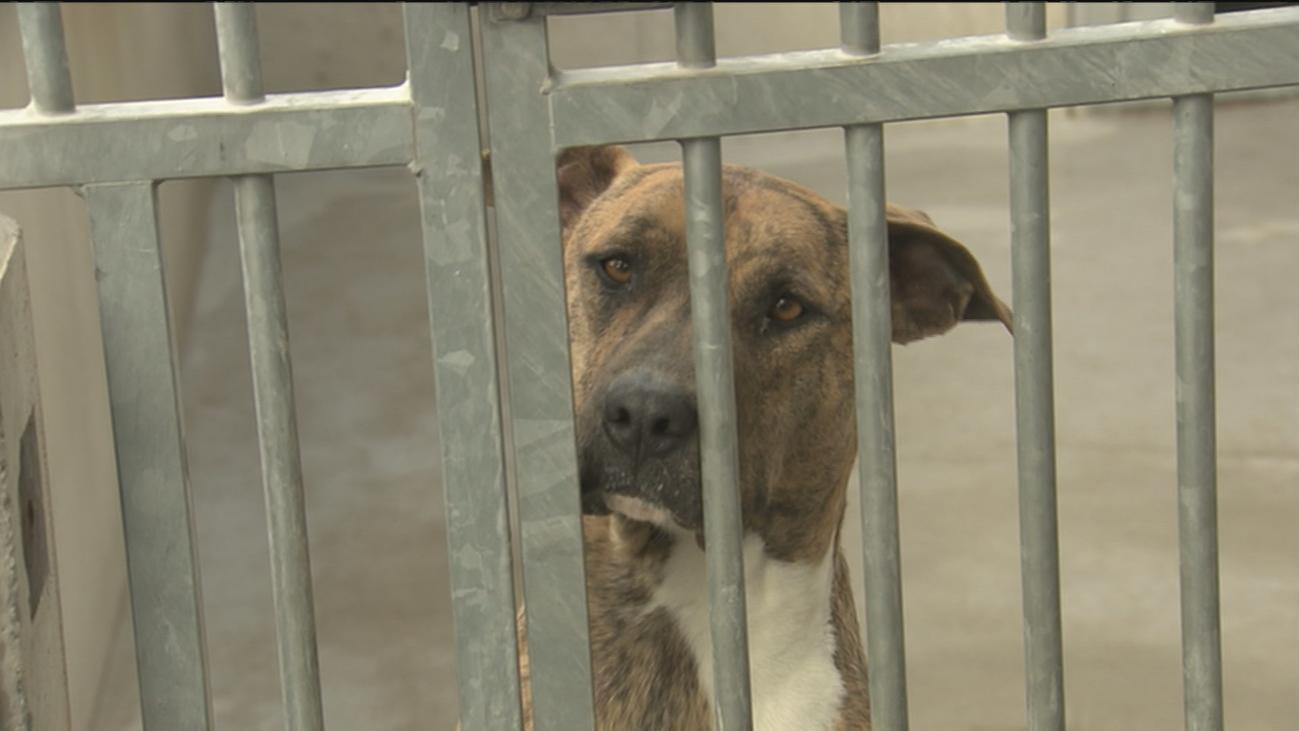 Alerta por el abandono de perros en verano