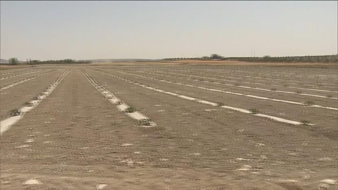 El campo madrileño se enfrenta a una larga sequía