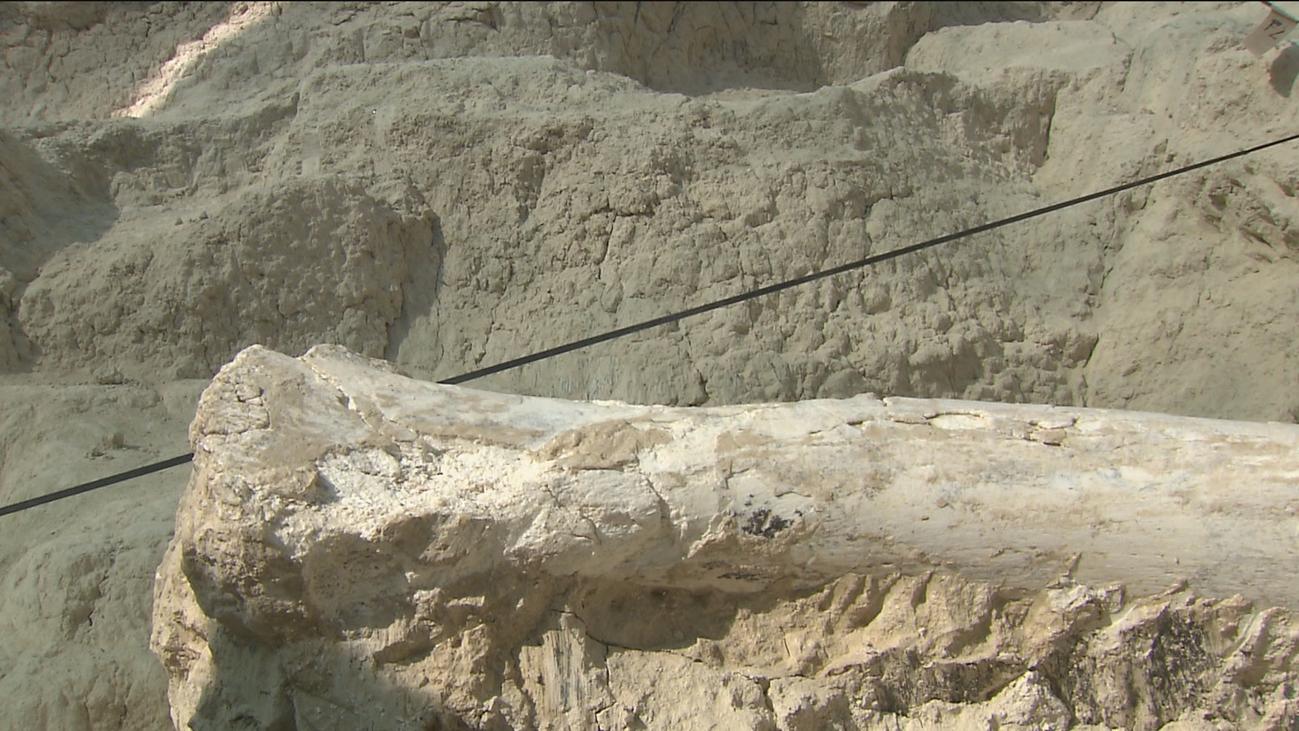 Descubre como era Madrid hace 9 millones de años en el Cerro de los Batallones