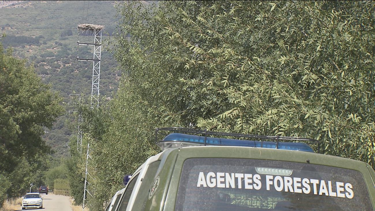 Los agentes forestales revisan los tendidos eléctricos para evitar incendios