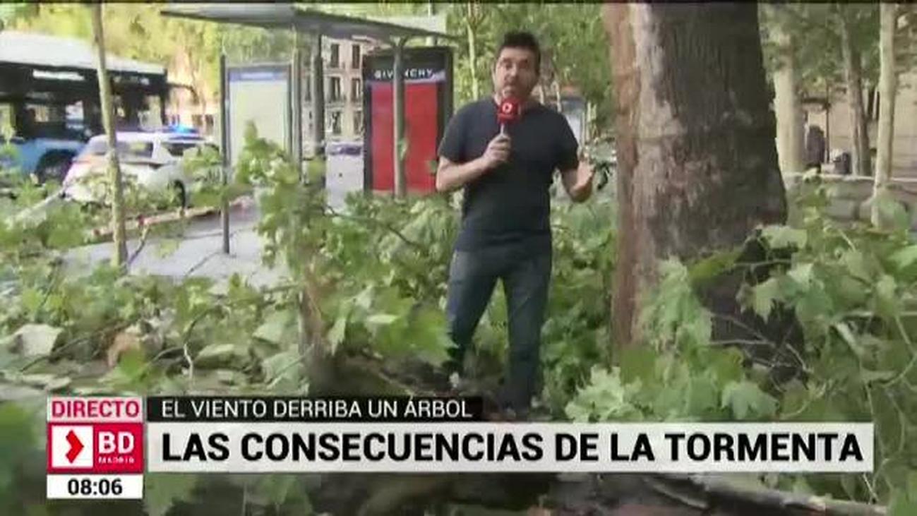 Cae junto a una terraza un árbol de grandes dimensiones en la Puerta de Alcalá