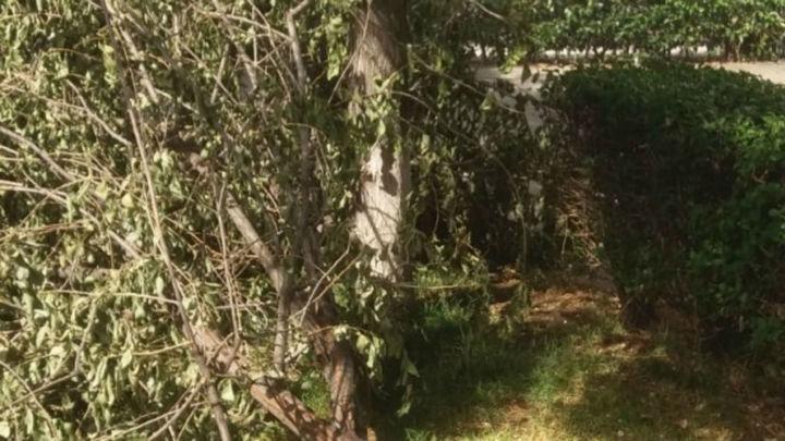 Denuncian la tala de árboles junto al Canal del Guadarrama en Las Rozas