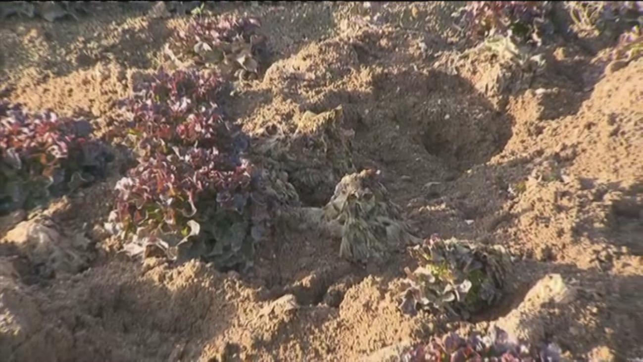 Los jabalíes provocan graves daños en los cultivos en Villa del Prado