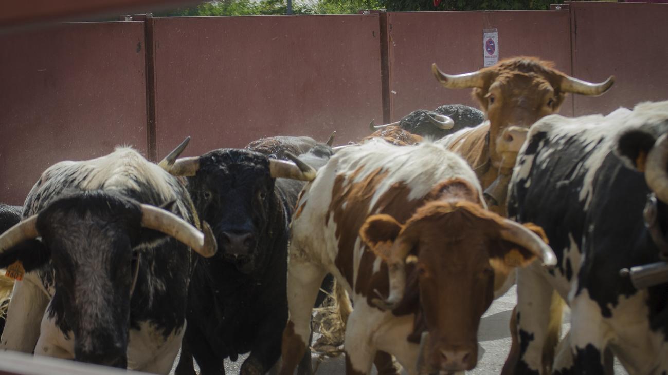Tres heridos leves en el primer encierro de las fiestas de Villalba
