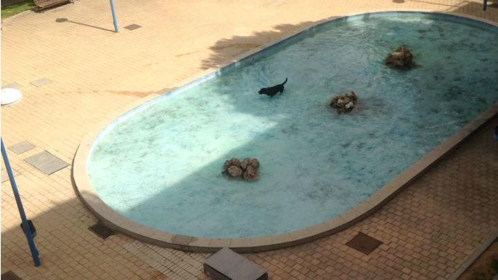 Denuncian que una fuente de Pinto se convierte en una 'piscina' para perros