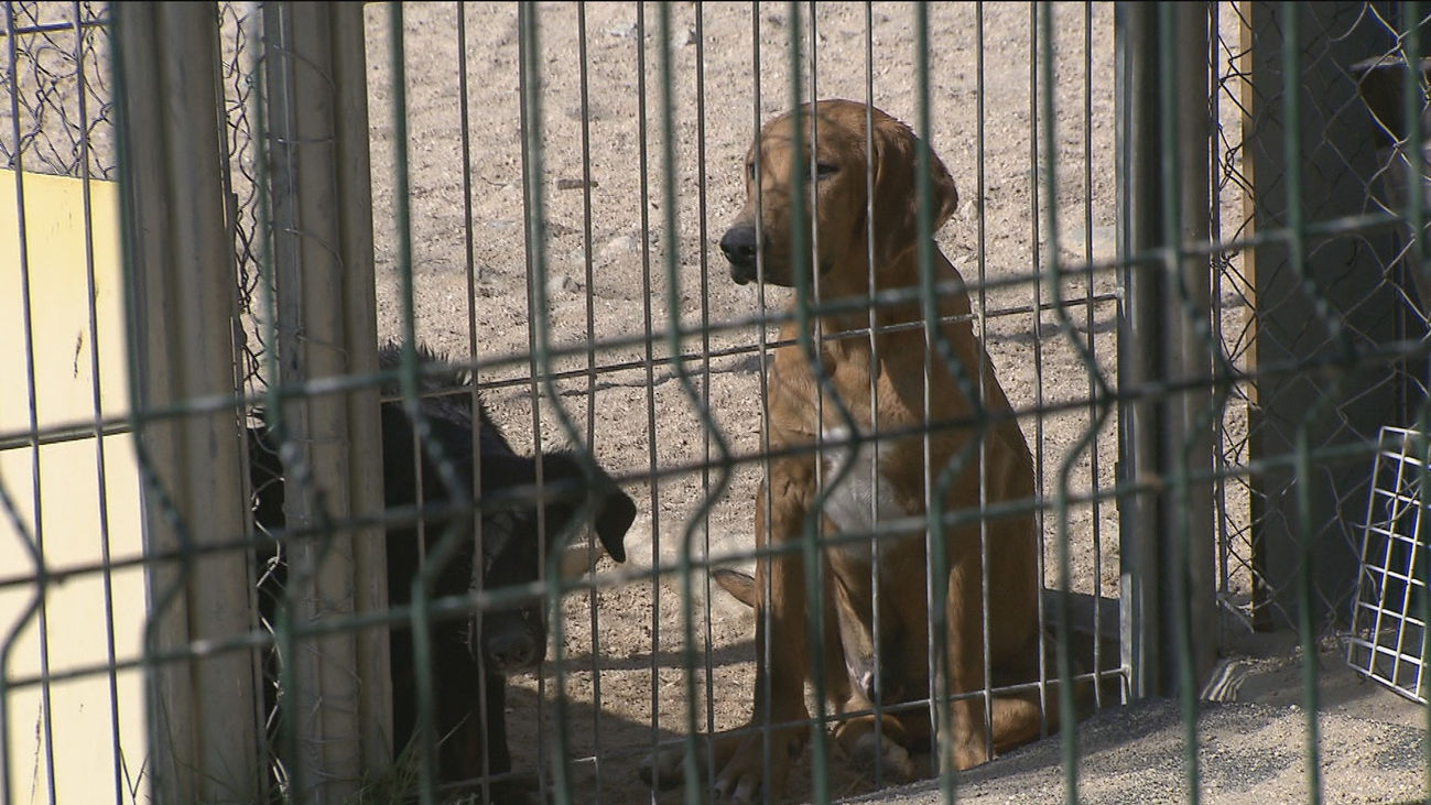 La Comunidad de Madrid promueve la tenencia responsable de mascotas