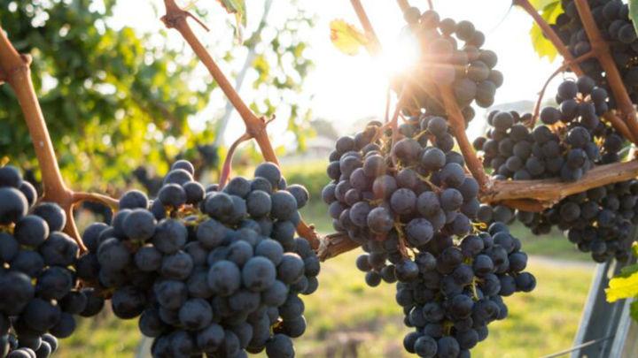 El Molar celebrará la 'Feria del Vino' en la primera semana de octubre