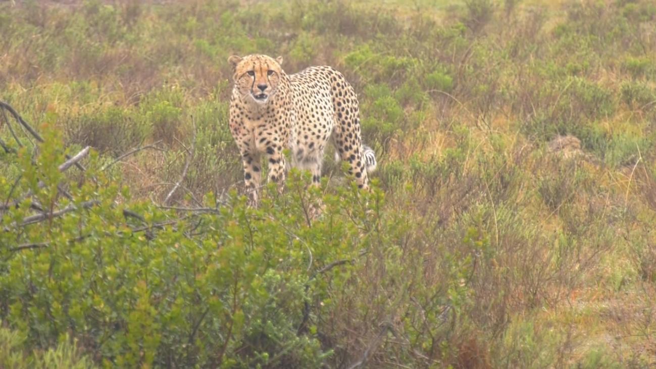 Un safari de lujo en la reserva privada de Shamwari