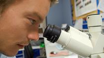 Investigadores españoles buscan cómo crear órganos de animales para humanos