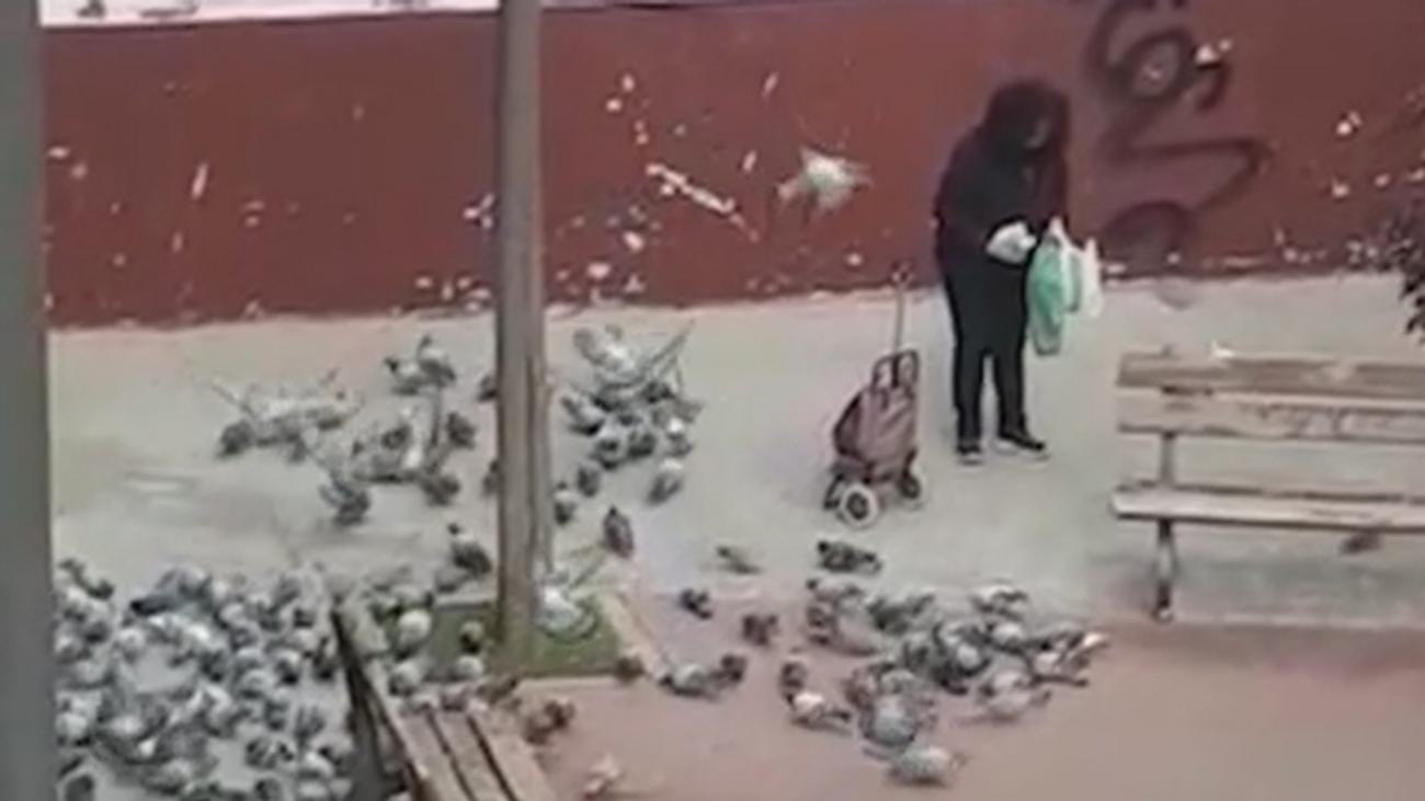 El extraño caso de 'la mujer de las palomas' de Getafe