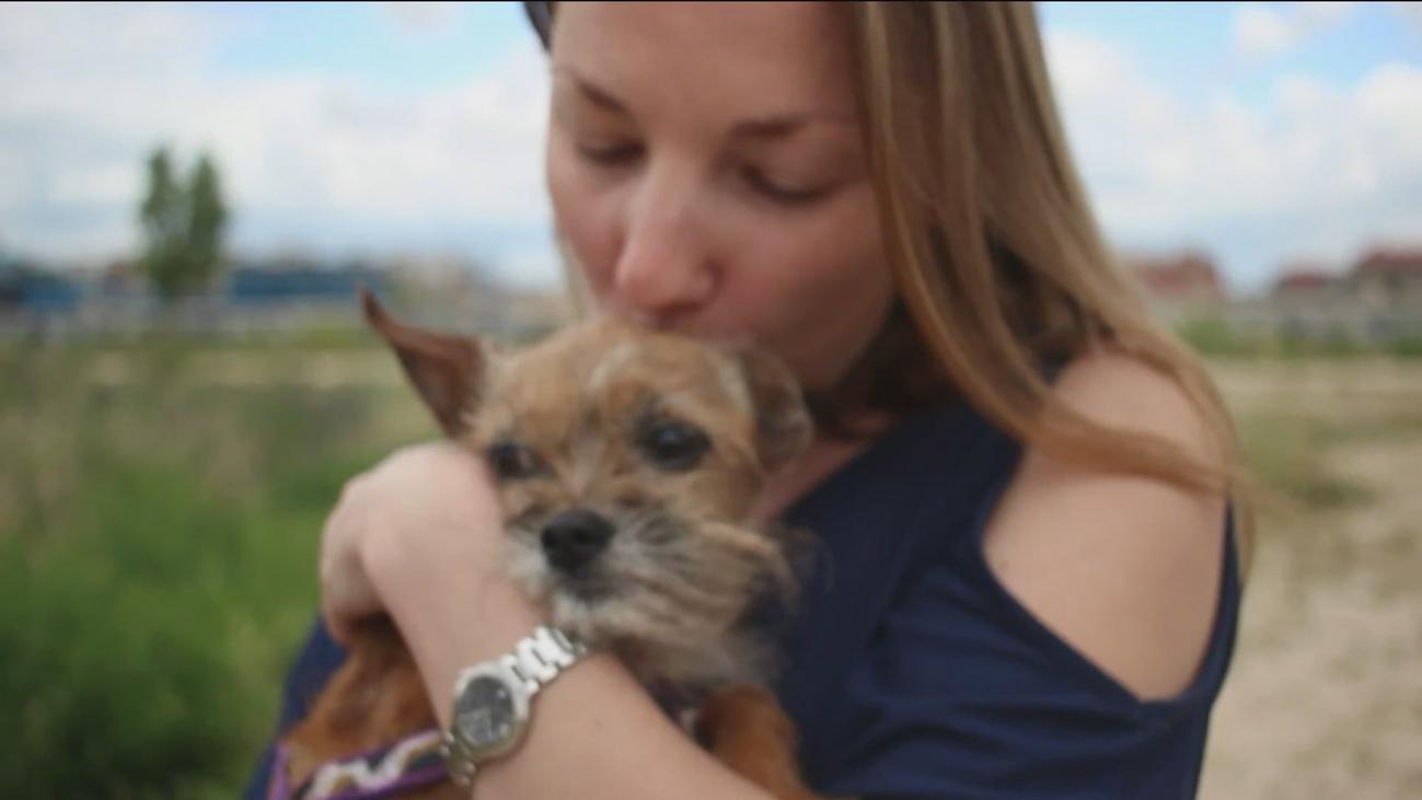 Arranca en Madrid un proyecto para adoptar a perros de personas fallecidas