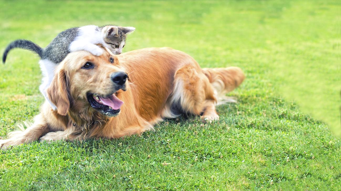 Enterrar a tu mascota en el campo te puede costar hasta 60.000 euros