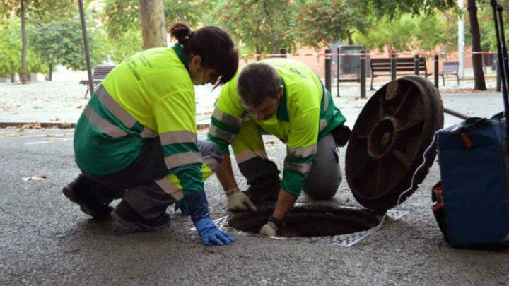 Profesiones del s. XXI: Control de plagas