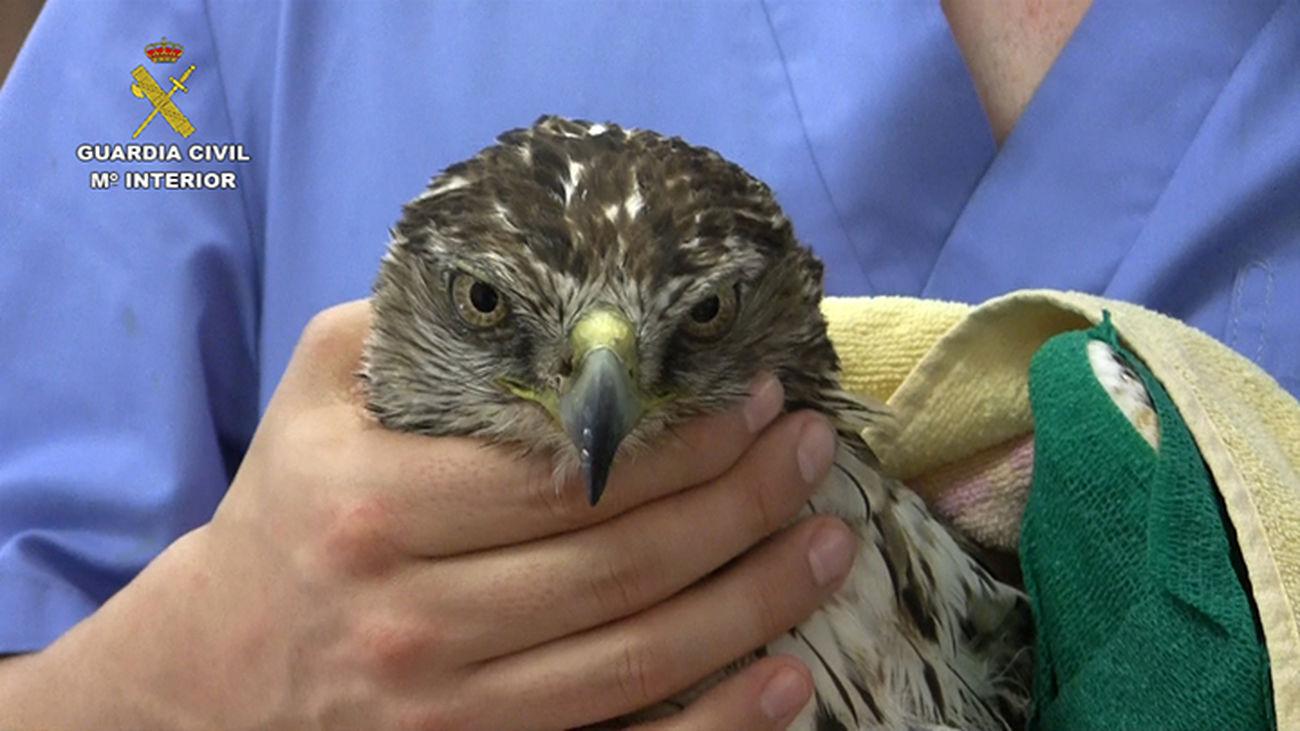 La Guardia Civil encuentra más de un centenar de aves electrocutadas
