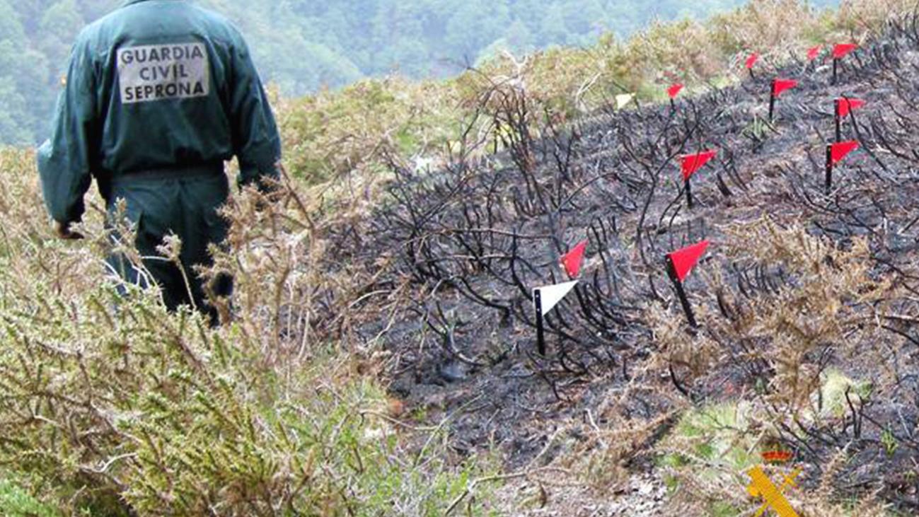 Miraflores analiza el daño a la fauna y flora tras el incendio