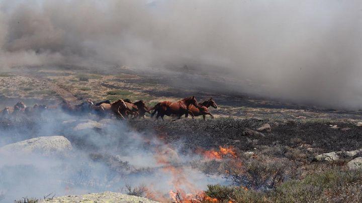 Ciro, el piloto bombero que salvaba a los caballos en el incendio de La Granja