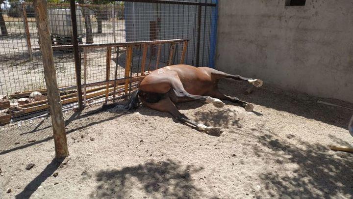 Desmantelan un establecimiento con animales en malas condiciones en Getafe
