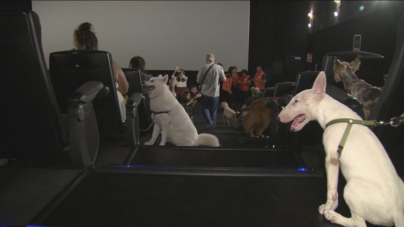 Al cine con tu mascota por un día