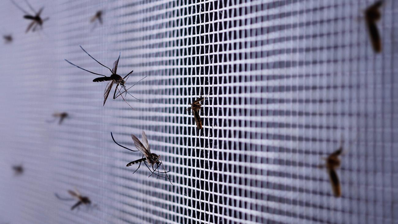Las pulseras repelentes contra los mosquitos no son del todo eficaces