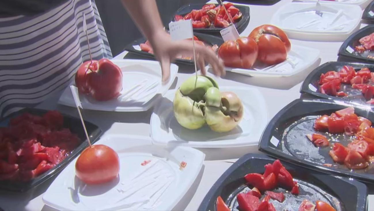 Llega la XIV edición del concurso de tomates en Robledo de Chavela