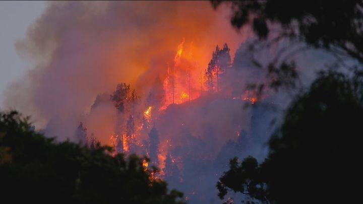 El fuego del incendio de Gran Canaria alcanza en el Parque Natural de Tamadaba